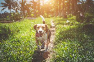 dog running along path