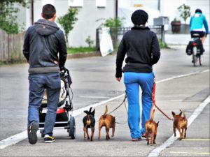 dogs walking on pavement with family